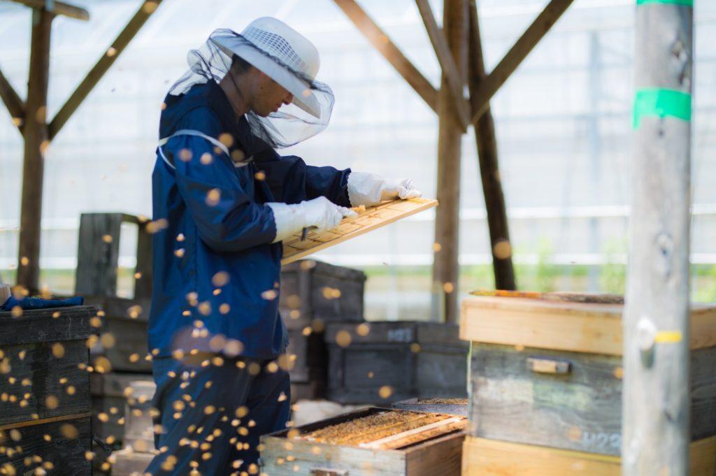 養蜂の作業